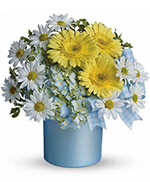 Teleflora's Once Upon a Daisy